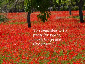 red_poppy_field_of_poppies_poppies